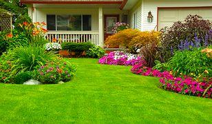 Wypróbuj sposoby, dzięki którym trawnik powróci do świetnego wyglądu