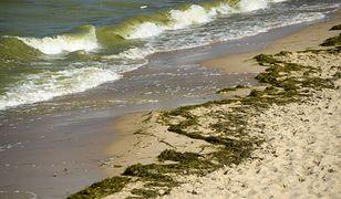 Czym są sinice? Zamknięto kąpieliska nad Morzem Bałtyckim