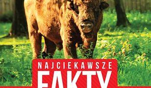 Najciekawsze fakty. Polska