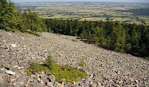 Cenne odkrycie polskich paleontologów w Górach Świętokrzyskich