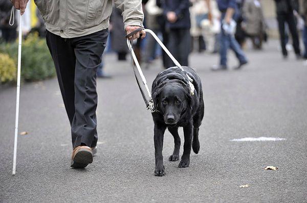 Kierowca busa nie zabrał niewidomej, bo była z psem przewodnikiem