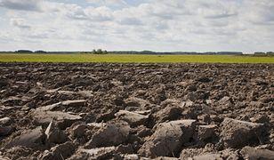Ziemia rolna drożeje o 18% rocznie