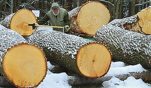 Referendum w sprawie lasów?