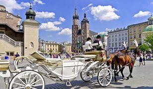 Kraków. Są zarzuty dla dorożkarza, który zmusił zwierzę do pracy, mimo choroby (zdjęcie ilustracyjne)