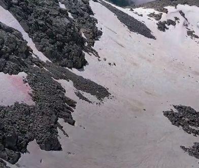 Różowy śnieg pojawił się w Alpach (Włochy)