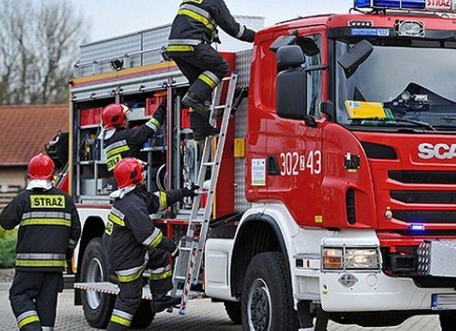 Strażacy znaleźli w lesie koło Grabówki nadpalone zwłoki