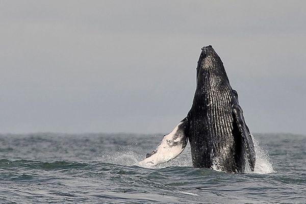 Eksperci: oceany chorują coraz poważniej