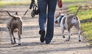 Przemyśl. Nie żyje 12-latek pogryziony przez psy. Zmiana w śledztwie. Nowe informacje
