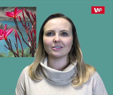 Powitaj Nowy Rok pod palmami. Co oferują biura podróży?
