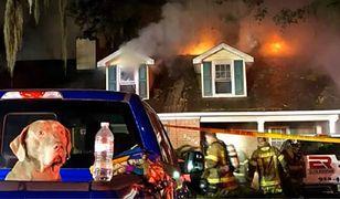 Pies uratował pięcioosobową rodzinę z pożaru