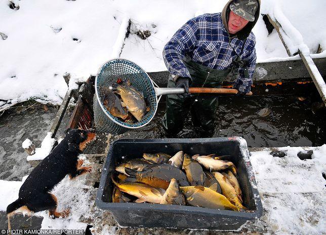 Hodowcy ryb narzekają na warunki, które narzucają im hipermarkety