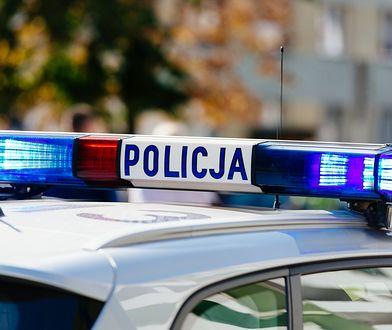 Malbork. Kierowca uciekł przed policją w pole kukurydzy