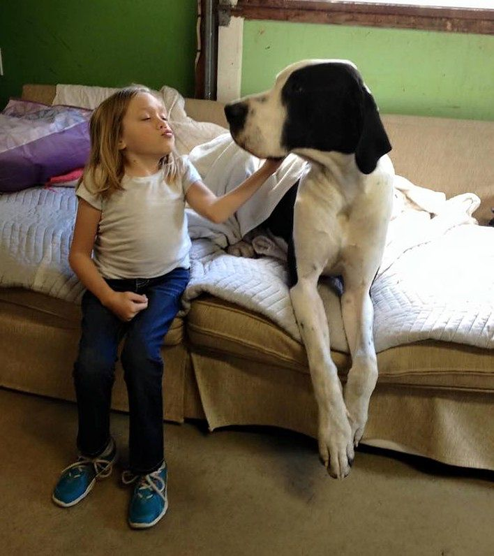 Terapeutyczna moc psiej pomocy