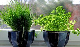 Oczyszczanie powietrza - rośliny doniczkowe, które warto mieć