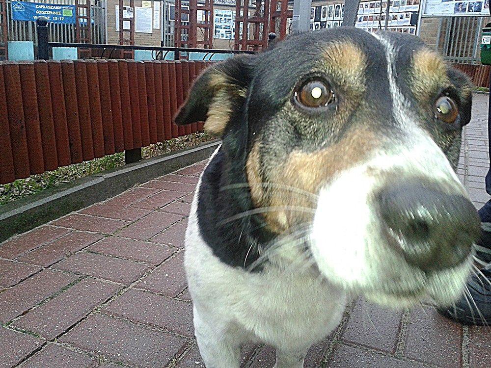 Pies, który jeździł koleją