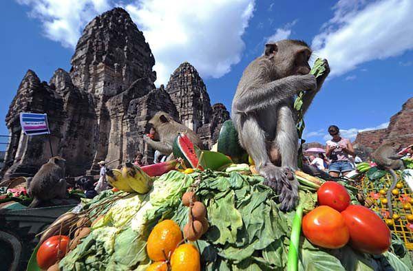 Jedzą jak... małpy. To dopiero obżarstwo - zdjęcia