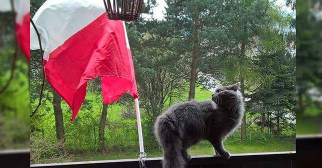Dziś święto polskiej flagi. Pokazaliście, jak je świętować!