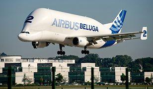 Podniebny gigant jeszcze większy. Nowa odsłona Airbusa Beluga