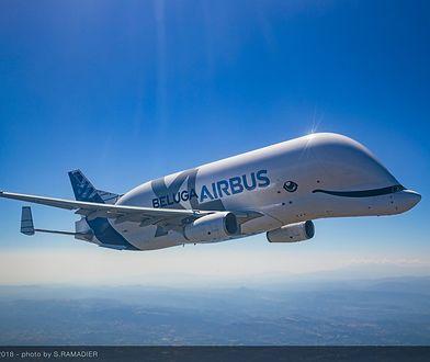 Airbus Beluga XL: pierwszy lot testowy. Samolot, który wygląda jak uśmiechnięty delfin