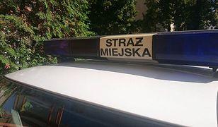 Pary w autach w lesie strażnicy z Łodzi spotykają co kilka dni.