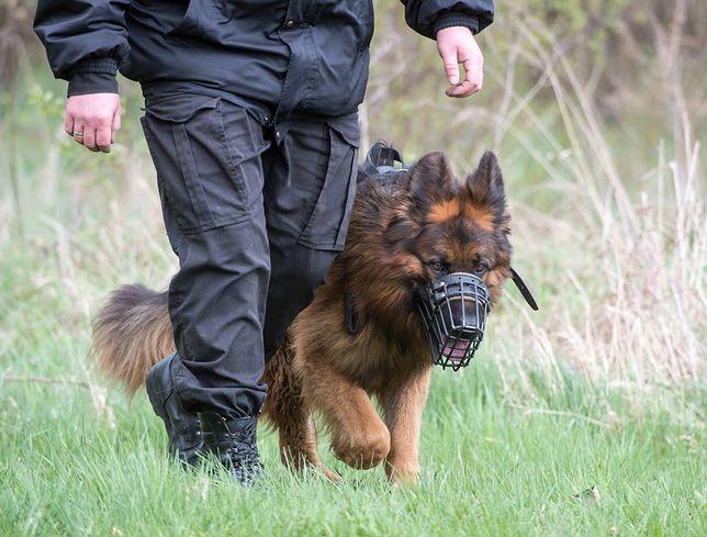 Psy policyjne często pomagają ratować ludzi