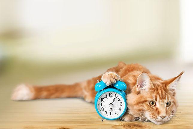 Zmiana czasu 2019 - kiedy wprowadzamy czas letni? Będziemy spać dłużej, czy krócej?