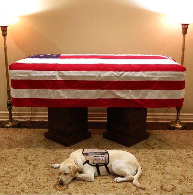 Pies George'a H.W. Busha wzruszył miliony. Wiadomo, gdzie trafi