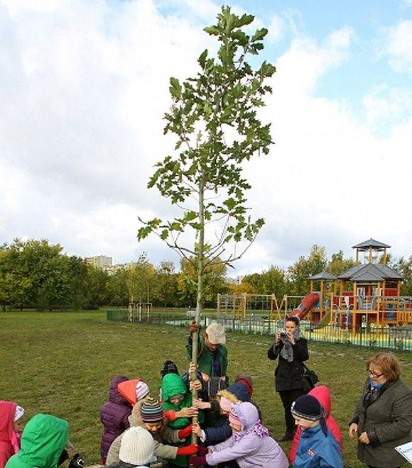 Bemowo miało zasadzić 20 tysięcy drzew. Zasadzi 20