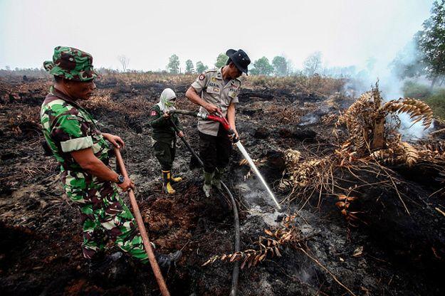 Pożary lasów w Indonezji