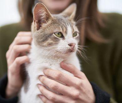 Koci pasożyt groźny dla człowieka. Prowadzi do trwałych zmian w mózgu