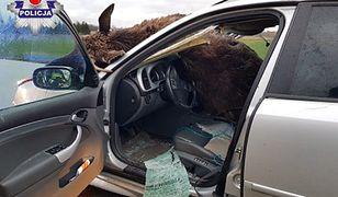 Groźny wypadek pod Świdnikiem. Kierowca uderzył w łosia