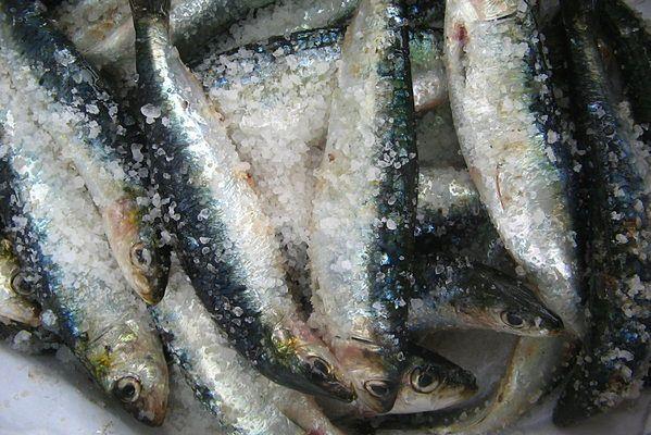 W magazynie przy Doświadczalnej odkryto tony starych ryb/Zdjęcie ilustracyjne