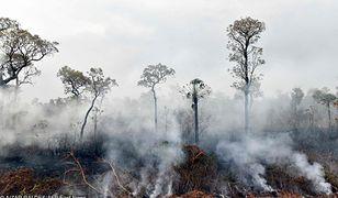 Puszcza Amazońska i klimat. Zabraknie tlenu?