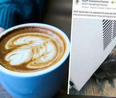 W Poznaniu można napić się kawy w towarzystwie szopa Rocky'ego