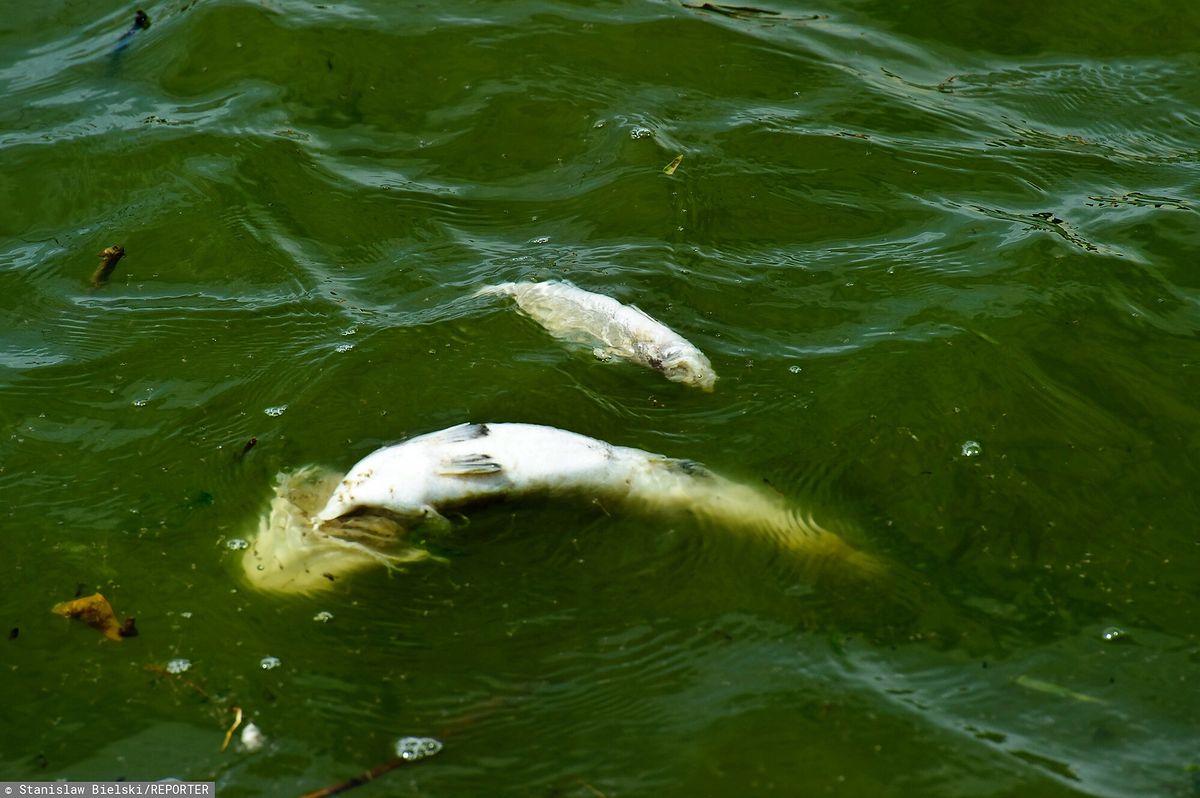 Martwe ryby w Zatoce Puckiej