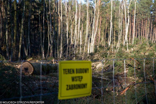 Mierzeja Wiślana: mieszkańcy oraz organizacje ekologiczne planują protest przeciwko wycince drzew pod przekop