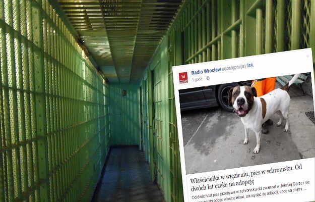 Są chętni na adopcję psa, ale jego właścicielka uparcie odmawia, chociaż sama nie może się nim zająć
