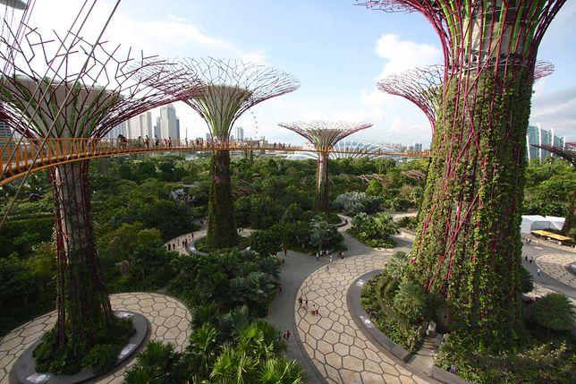 Singapur - Flower dome, Cloud forest