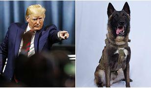 Wojskowy pies w trudnej misji. Donald Trump publikuje zdjęcie