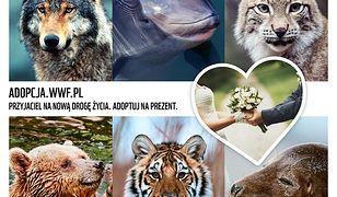 Adopcja zagrożonego gatunku zwierząt prezentem ślubnym