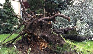Burza. Nawałnice przeszły przez Polskę. Połamane drzewa, pozrywane dachu, domy bez prądu