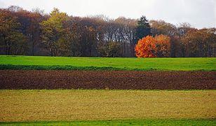 Rosną ceny ziemi. W dziesięć lat o blisko 400 procent