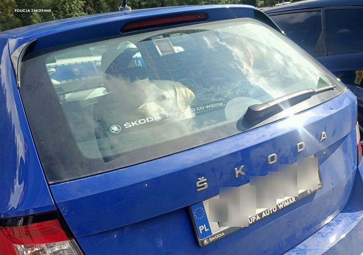 Pies spędził kilka godzin w nagrzanym samochodzie