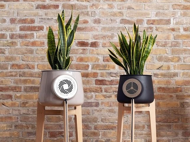 Warto starannie dobierać rośliny, które oczyszczą powietrze