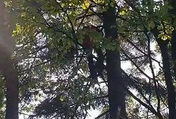 Paralotniarz zawisł 20 metrów nad ziemią. Mężczyzna był w szoku