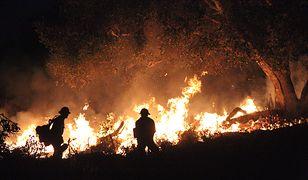 Pożar w Niemczech - płonie 300ha lasów. Ogień dotarł do budynków mieszkalnych.