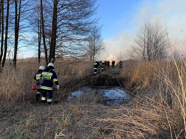Pożar w Biebrzańskim Parku Narodowym. Reporter WP: pożarem objęte 6000 hektarów