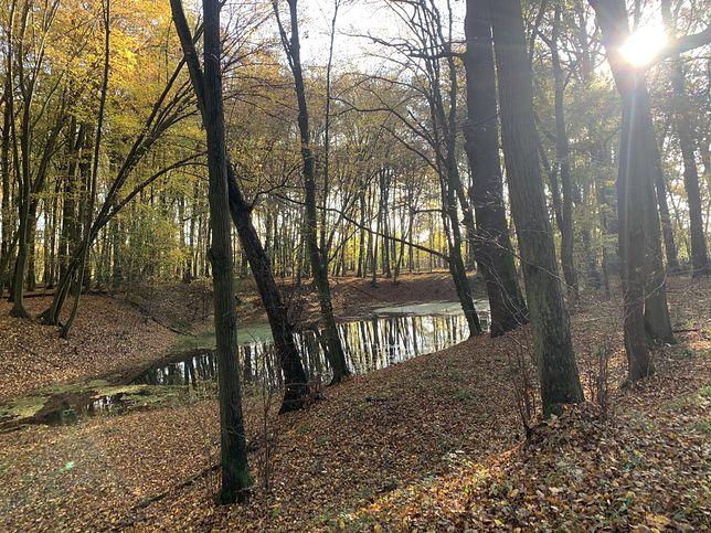 Wrocław. Pogoda. 21 listopada - mrozy dotarły. W niedzielę i poniedziałek deszcz