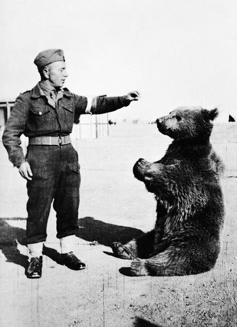 ''Soldier Bear'': powstaje kolejny film o niedźwiedziu Wojtku, bohaterze drugiej wojny światowej