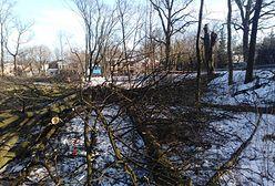 Mazowieckie. Wycięto ponad 60 zdrowych drzew w centrum Milanówka